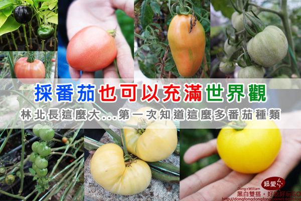 【新竹景點】親子出遊採番茄的好所在『金勇DIY休閒農場』,全世界的番茄讓我大開眼界@D&W黑白雙搭