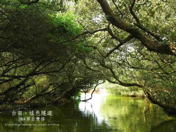 【台南Dong遊記】台灣的亞馬遜熱帶雨林-四草綠色隧道!超美!@安南區