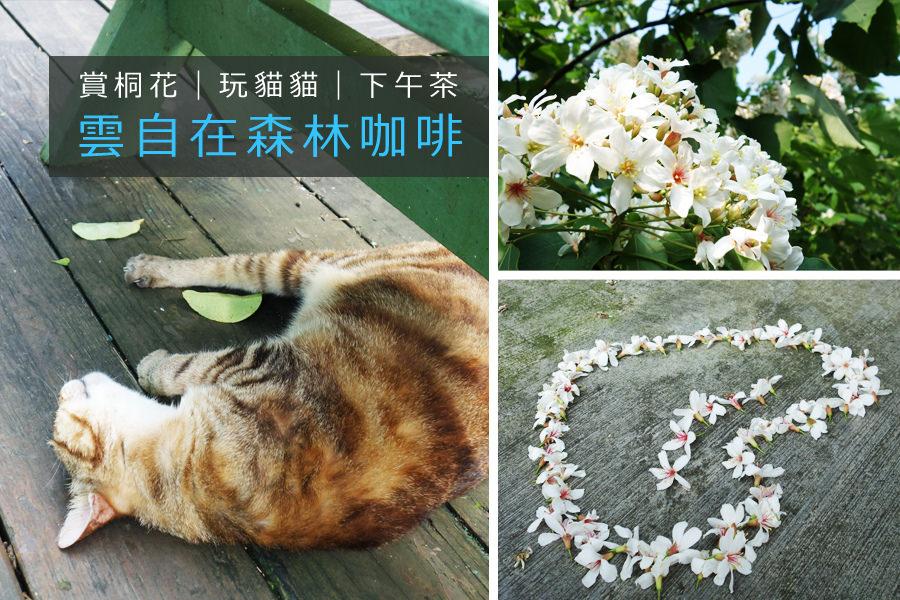 桃園大溪雲自在森林咖啡賞桐花、賞螢看螢火蟲、喝咖啡、吃美食、玩貓咪!多個願望一次滿足
