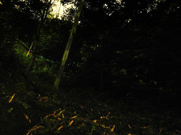 【DONG台北玩樂】台北南港也可以看螢火蟲!還可以欣賞101夜景 @四獸山虎山-慈聖堂入口
